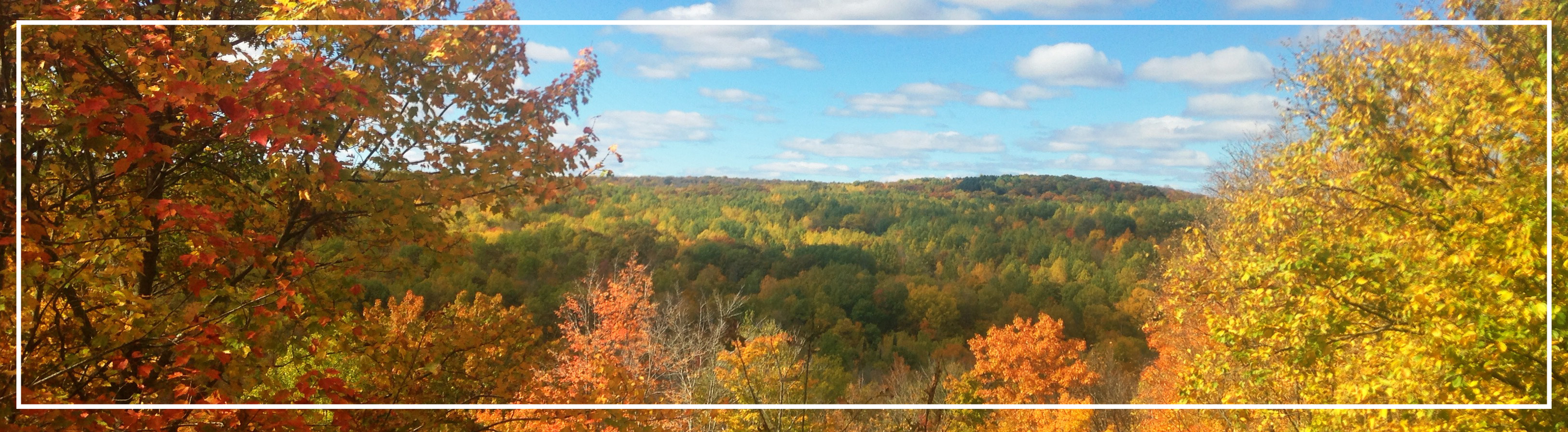 landscape image - deciduous trees fall colors